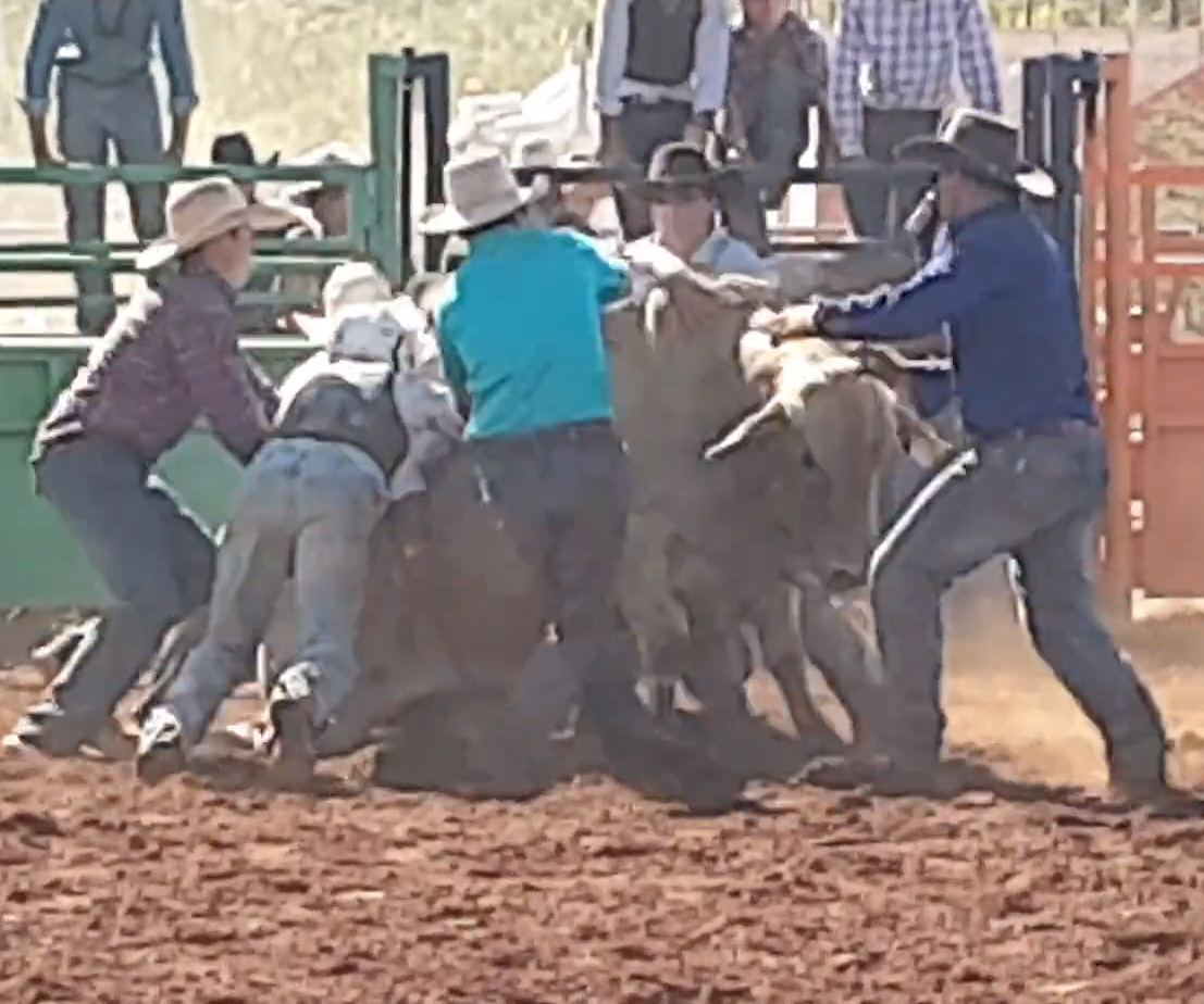 Bull death at Quamby rodeo 2019