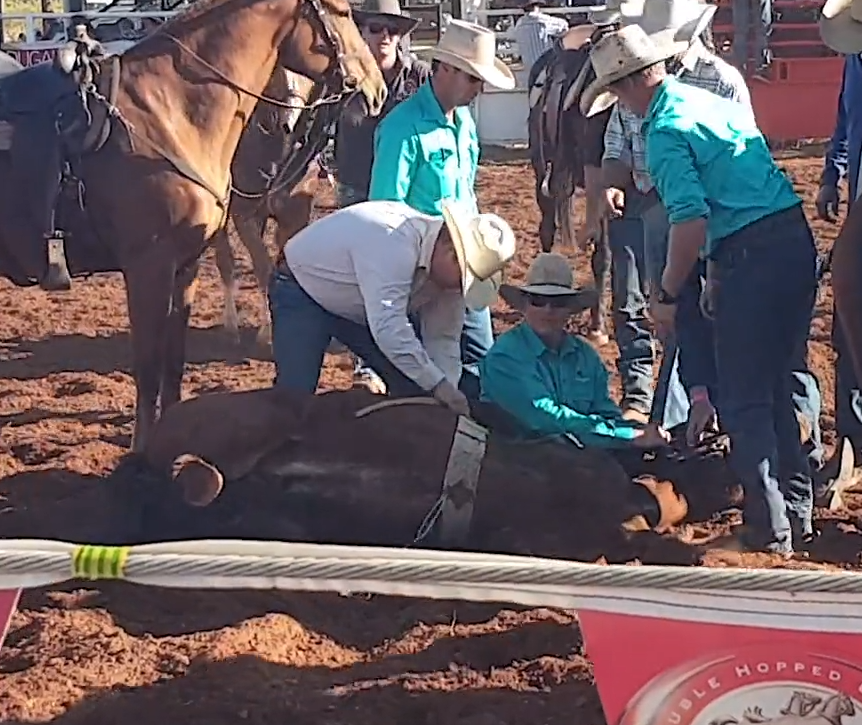 Horse died at Quamby Rodeo 2019