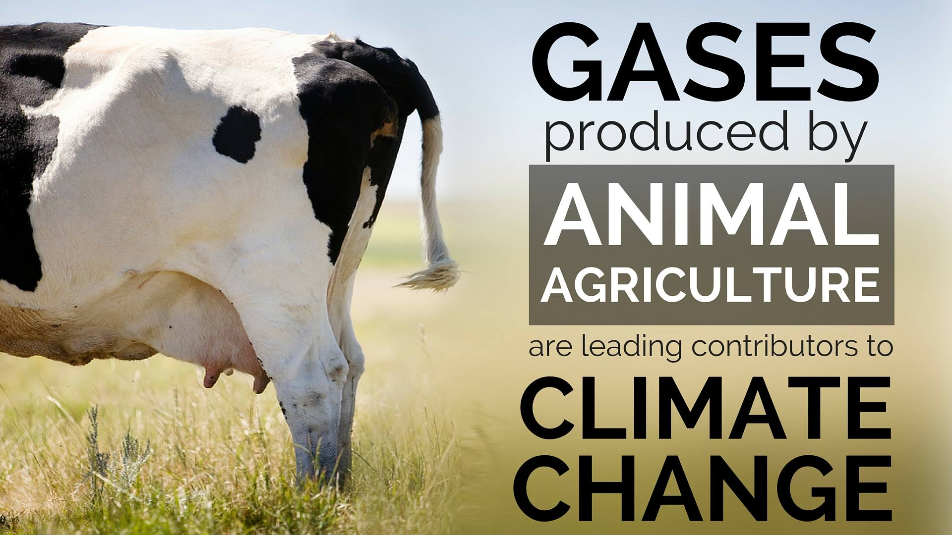 animal husbandry production and global climate Greenhouse gas abatement strategies for animal fertiliser animal husbandry 1 introduction global atmospheric production from animal.