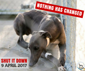 Greyhound Racing - Shut It Down