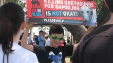Luca at greyhound protest   Photo Gayle D'Arcy