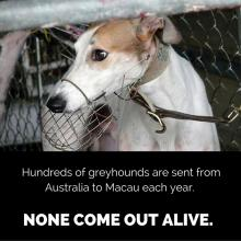 greyhound racing | Animal Liberation Queensland