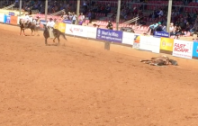 Horse death at Mount Isa rodeo (10 Aug 2018)