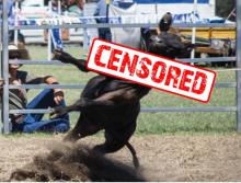Rodeo Billboard Censored