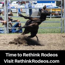 Time to Rethink Rodeos - RethinkRodeos.com - Ban Calf Scruffing