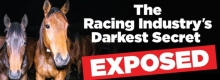 Horse Racing - The Racing Industry's Darkest Secret Exposed