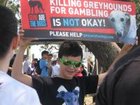 Luca at greyhound protest | Photo Gayle D'Arcy