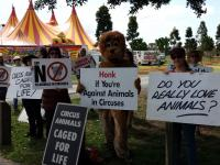 Stardust Circus Protest