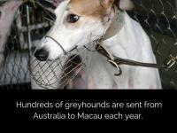 Close Canidrome Greyhound Racing Track in Macau