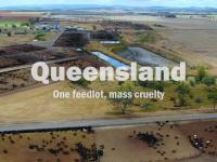 Queensland feedlot drone photo. Caption reads 'One feedlot, mass cruelty.'