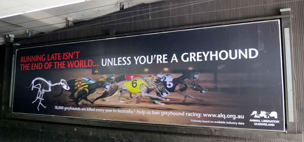 Greyhound Racing Billboard at Brisbane Central Station