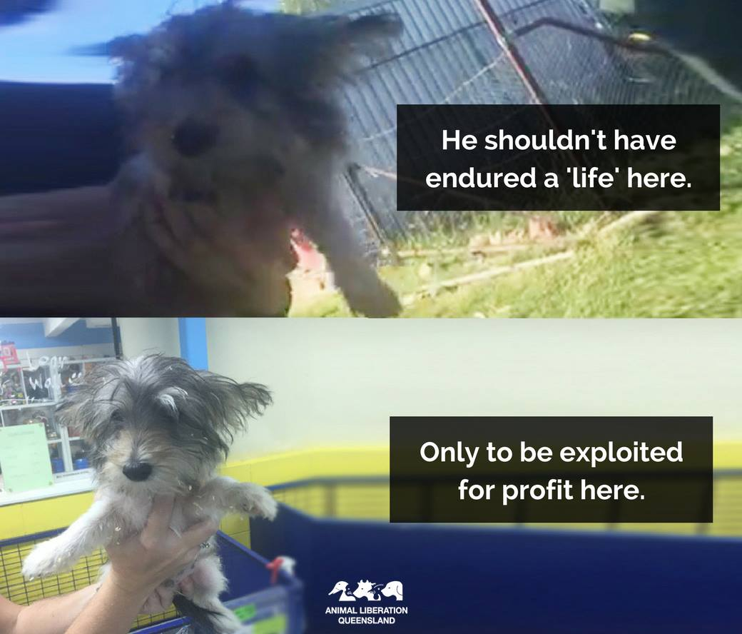 Puppy farm deception