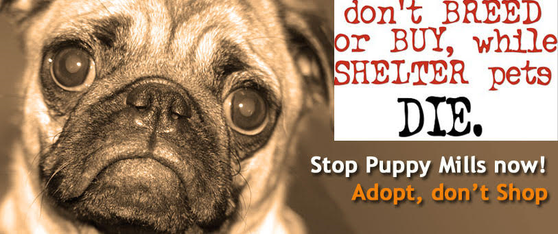 Puppy Farms | Animal Liberation Queensland