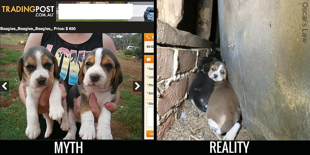 Puppy Farms | Animal Liberation Queensland