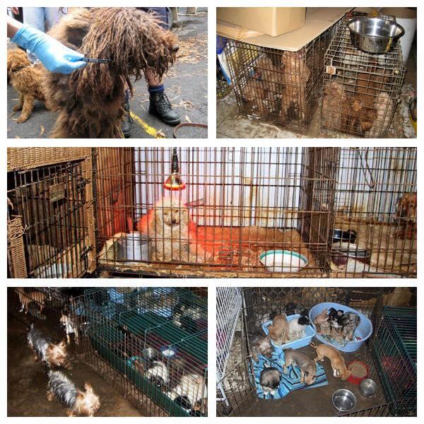 Puppy Farms Animal Liberation Queensland